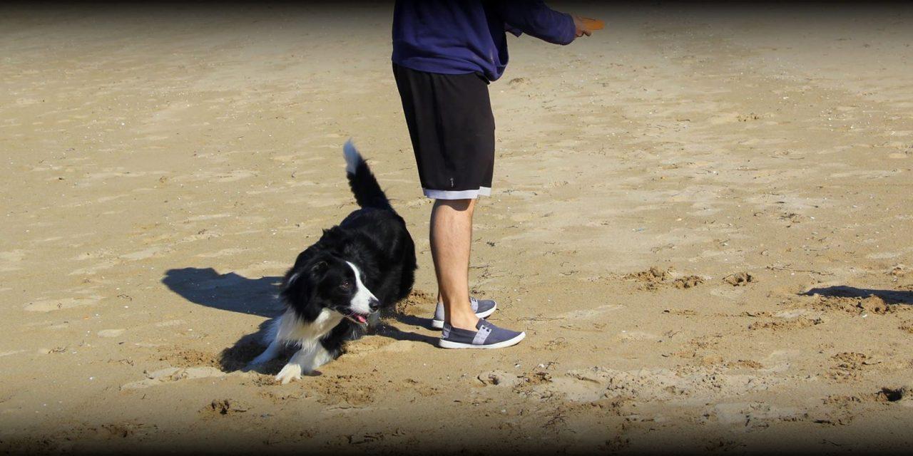 Habilidades caninas: RODEAR