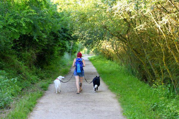 Cómo debe ser un buen paseo