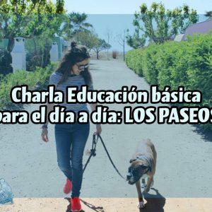 Charla ONLINE: Educación canina básica para el día a día; LOS PASEOS