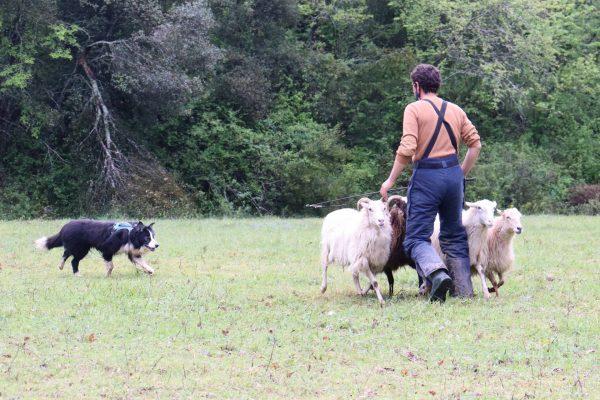 El pastoreo